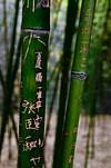 Calligraphy, Beijing, China