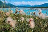 Yellow Dryas & the Noisy Range, British Columbia/Yukon Territory