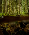Salmon River, OR