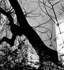 Enigmatic Window 03
