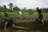 Displaced people digg graves in a cabage field next to the road for three teenage boys who were killed after a army tank run over them as they were fleeing fighting, Sunday, Oct. 26, 2008 near Kibumba some 40 kilometers north of Goma in eastern Congo