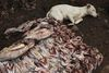 -A dog sleep next to fish on display at a shop,Wednesday, May 27, 2009 in the Kibera slum in Nairobi, Kenya.Kibera in Nairobi, Kenya is the largest slum in Africa, and has a population estimated at one million.