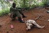 -A Kenya Wildlife Ranger rest at their camp next to a buffalo skull before they go on patrol looking for poachers in the Tsavo East national park, Tuesday, March 9, 2010 in Kenya.
