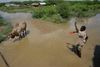 "A militia from the islamic courts chase a cow in floodwaters near the village of Marere in southern Somalia, Tuesday, Nov.28, 2006 after the Juba river burst its banks. Fears of a looming war in Somalia are hampering relief efforts for up to one million people hit by severe flooding, a senior U.N. official said Friday. Eric Laroche, the U.N.'s humanitarian chief for Somalia, said a ""corridor of peace"" is needed so aid can reach 400,000 people who have fled their homes to escape the worst flooding in a decade.(AP Photo/Karel Prinsloo)"