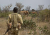A Kenya Wildlife Ranger look at elephants in the Tsavo East game park in Kenya 8 June 2013. PHOTO/KAREL PRINSLOO