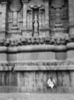 The Goddess Above, Thanjavur, Tanjore 2014   Edition 1 of 5