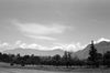 Mountain Cradling Trees, Srinagar 2015   Edition 1 of 5