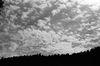 Sky over Tree Tops, Srinagar 2015   Edition 1 of 5