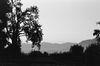 Tree and the Mountain, Srinagar 2015   Edition 1 of 5