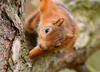 Sky High Squirrel