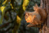 Sun Salutation Squirrel
