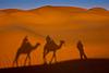 Saharan camel ride. Sunset. Ksar Ghilane.