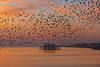 Flight of the starlings