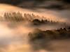 Saxon German trees in the mist