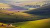 A slice of the South Downs