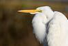 Egret Repose