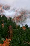 """Autumn """"Smoke"""""""