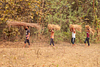 Group of people carrying hay on his head