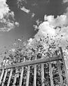 picket fence sky