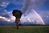 Cowherd watching Rainbow, Divar