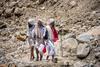 Pilgrims enroute Gaumukh
