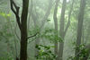FOREST IN THE RAINS 1