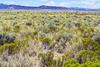 Alamosa, CO plains