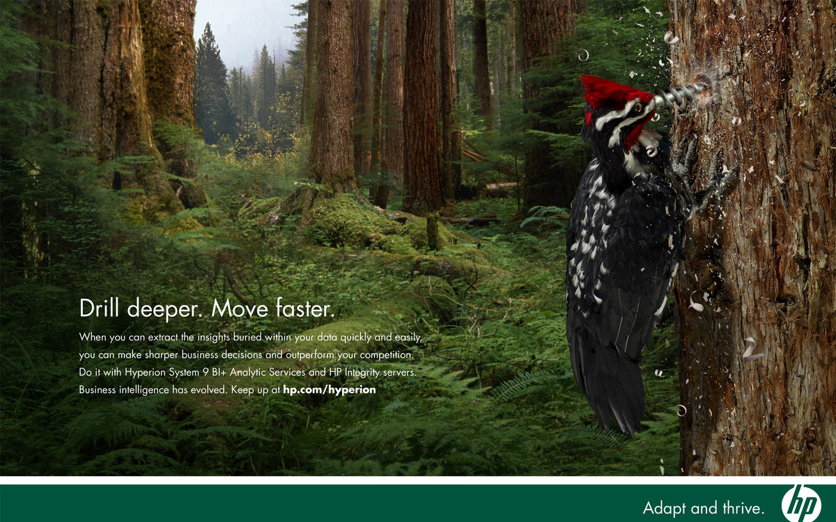 Adapt & Thrive Print – Woodpecker