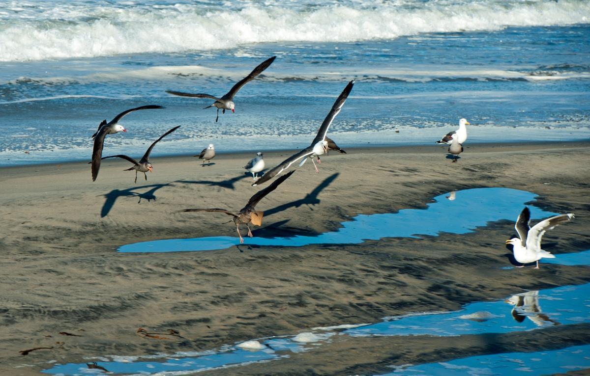 Aquatic Friends in Mission Beach