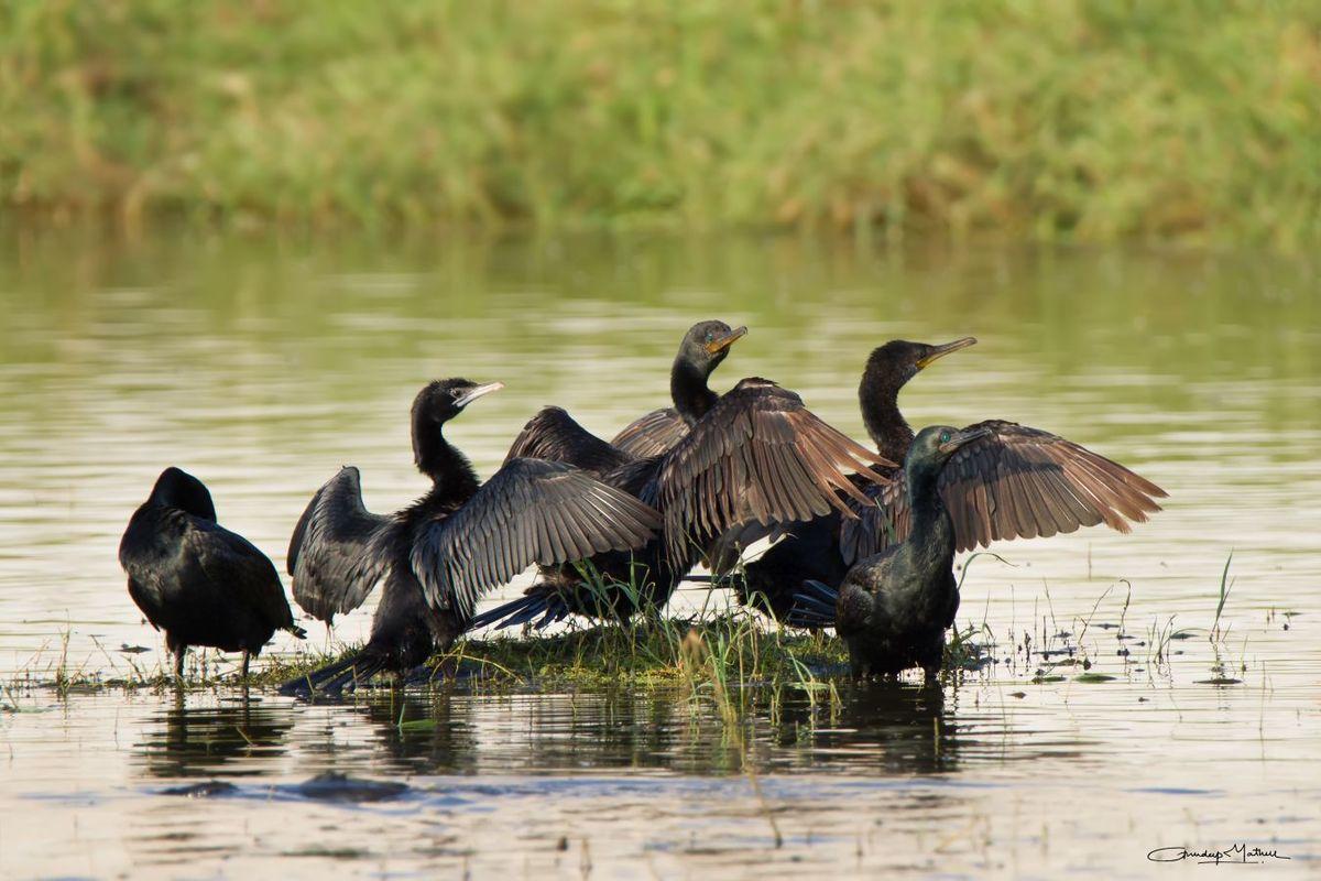 Bird Life near Jaipur