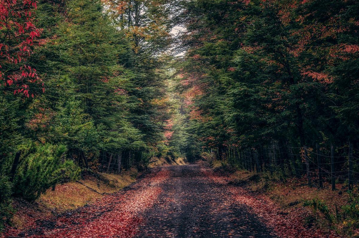 Caminos entre bosques