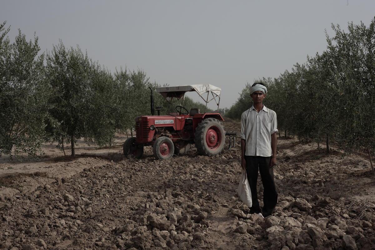 Olive Farm- Jaipur Portraits