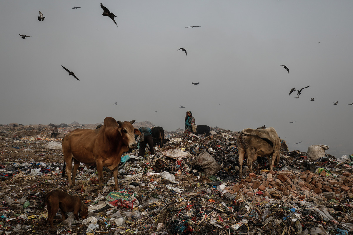 A woman segregates waste on a mound of garbage at Bhalswa landfill in New Delhi, India.