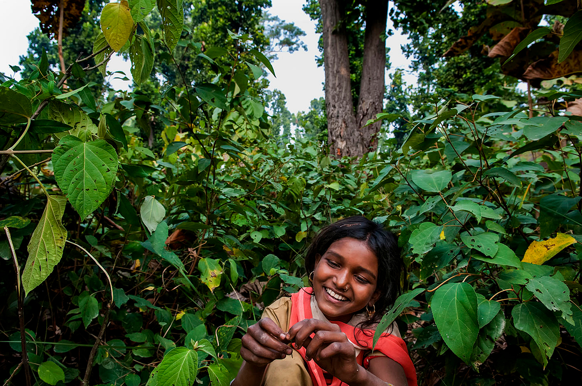 11 year old Suman plays with a twig while she takes a break between chopping wood at a nearby forest in Shravasti, India. Suman got married at 10 years of age and learnt of her marriage when the ceremonial turmeric was applied on her hands.