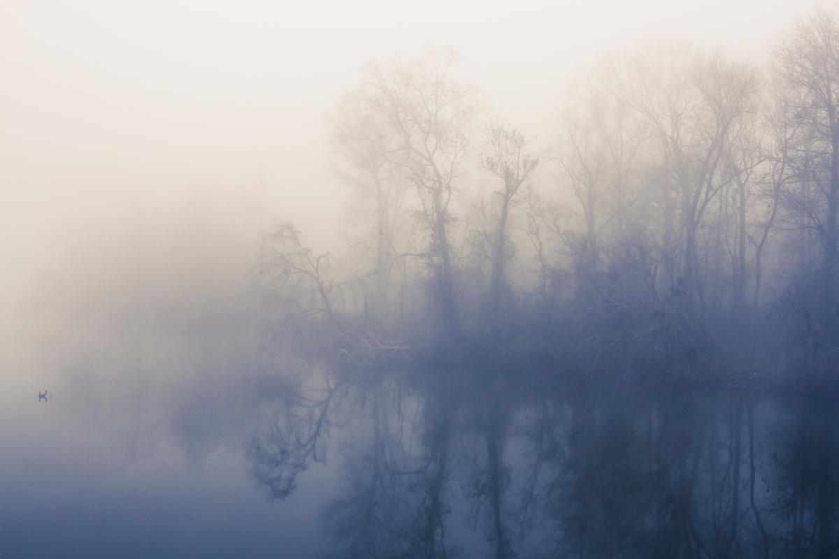 """Hazy Morning on the Broad"" - Winner of the 2018 Congaree Riverkeeper Judge's Choice Award  (Columbia, SC)"