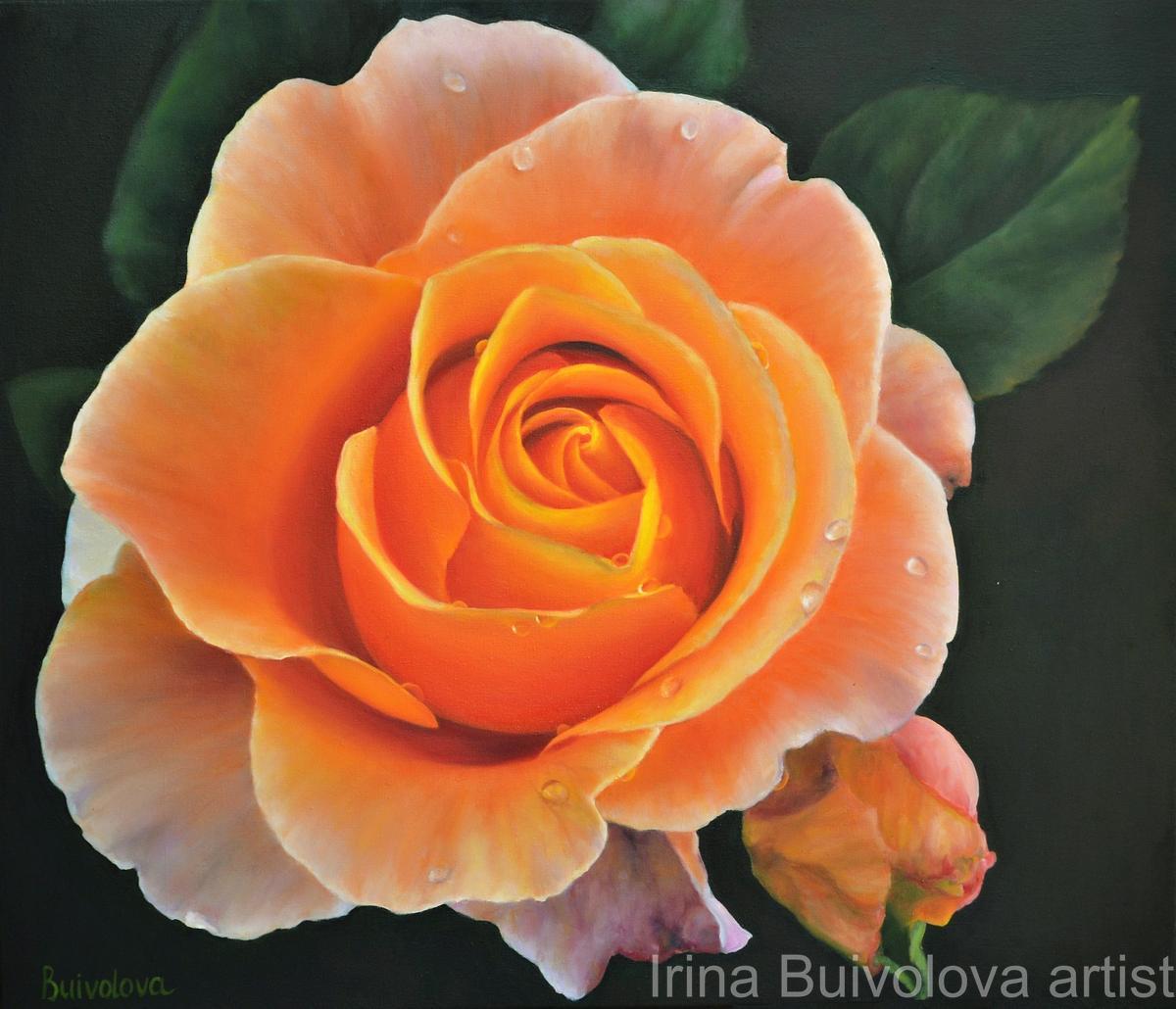 Orange rose oil on canvas size 60 70 cm