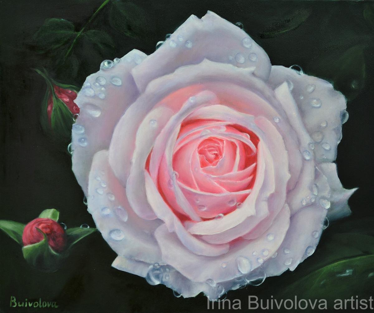 Rose aqua oil on canvas size 50 60 cm