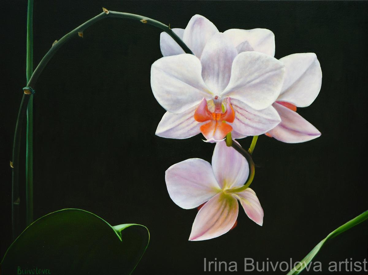 White orchid oil on canvas size 60 80 cm