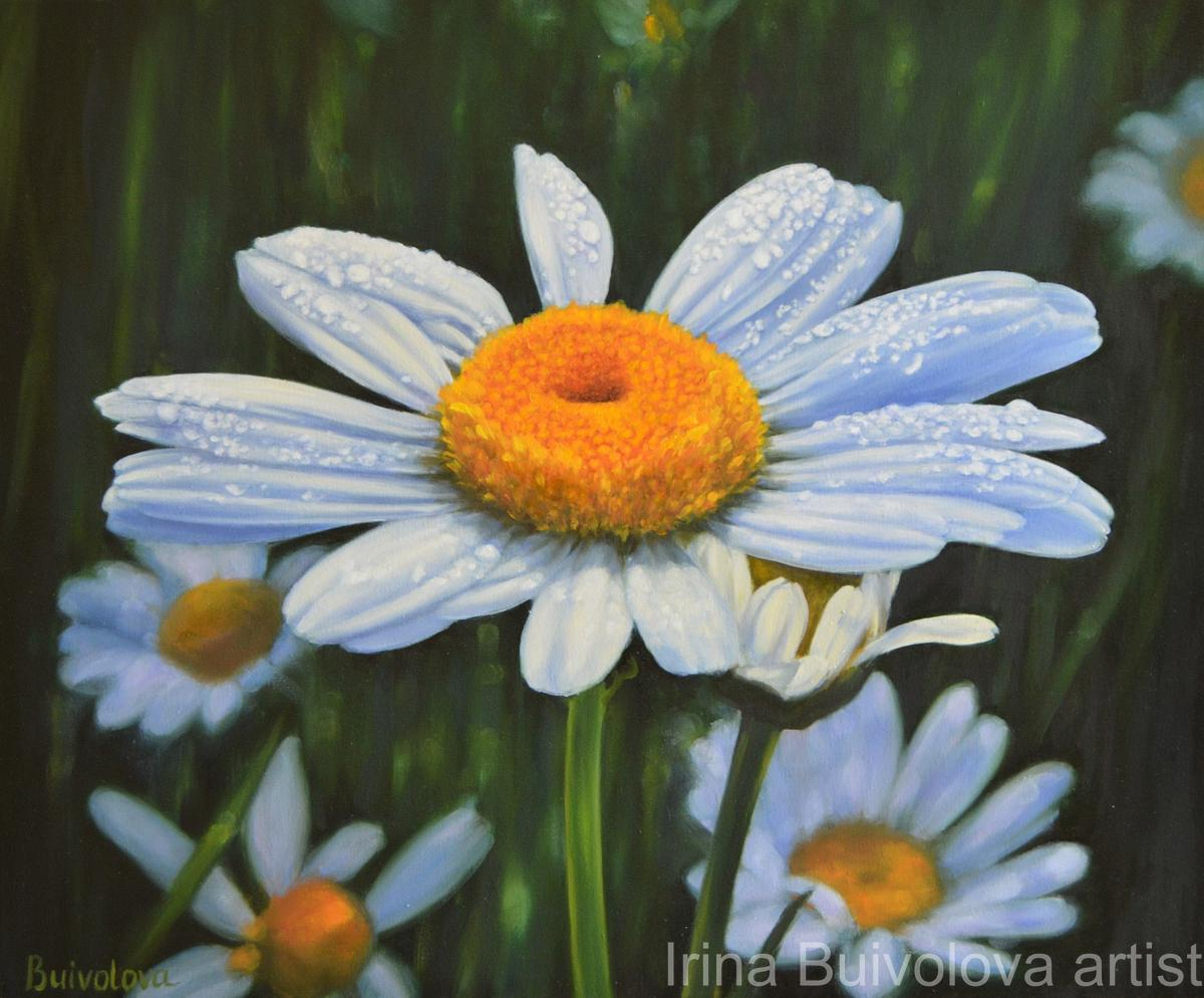 Chamomile dew oil on canvas size 50 60 cm