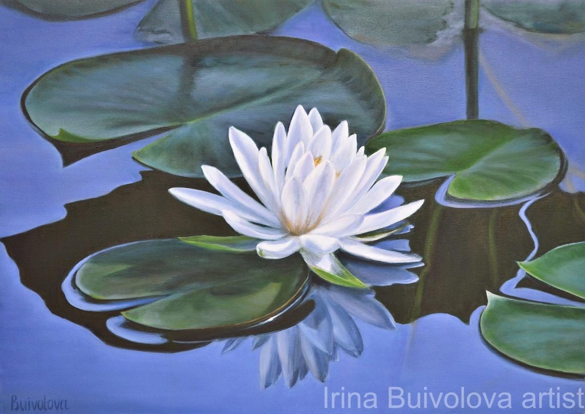 Water lily white painting oil on canvas size 50 70 cm