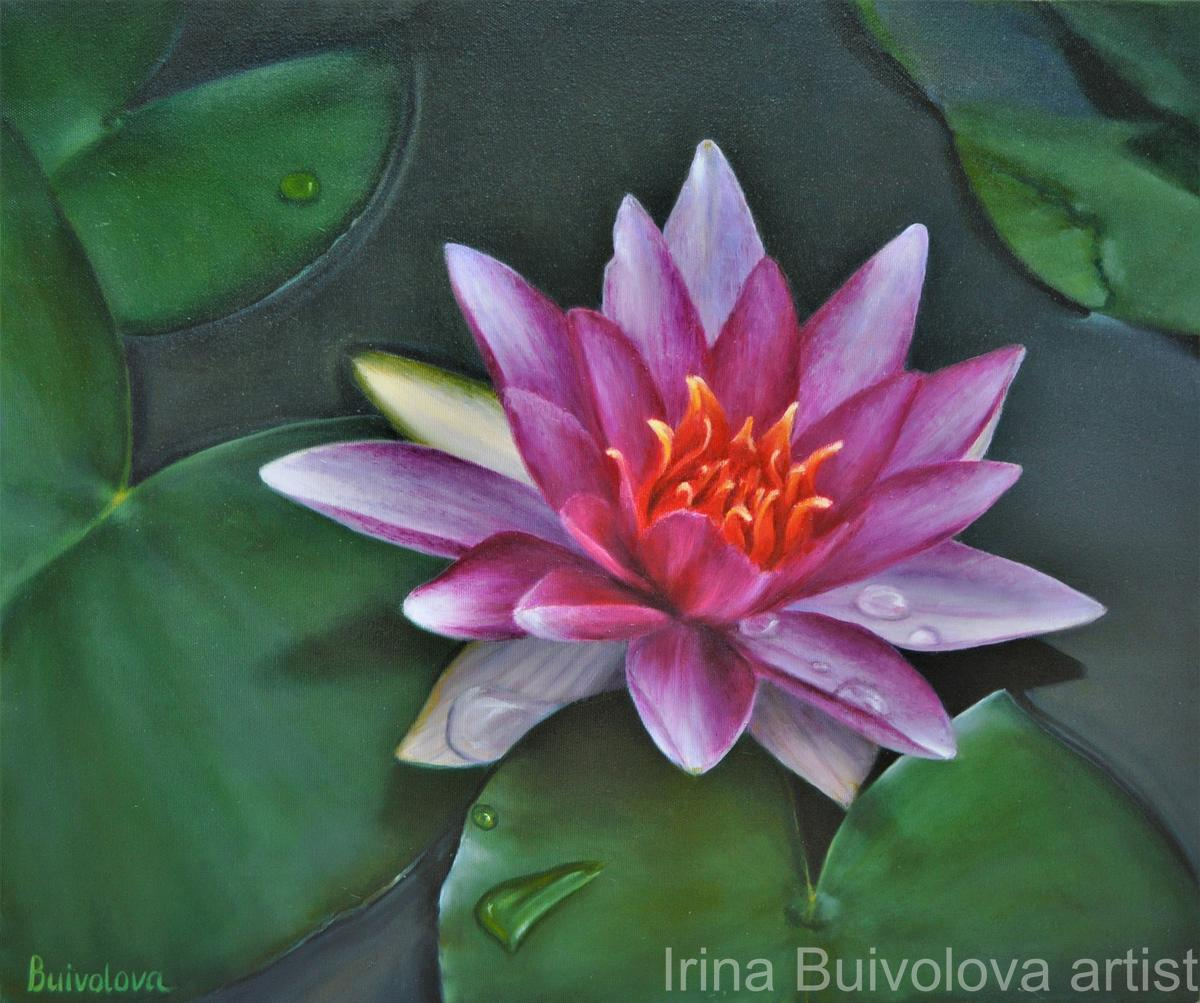 Crimson water lily  painting oil on canvas size 50 60 cm