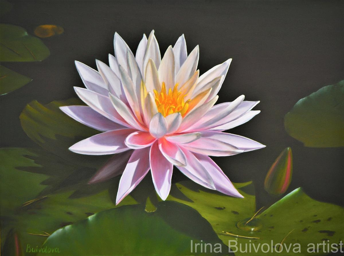 Pink water lily painting, oil on canvas size 60 80 cm
