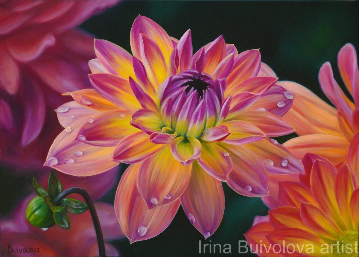 Orange dahlia oil on canvas size 50 70 cm