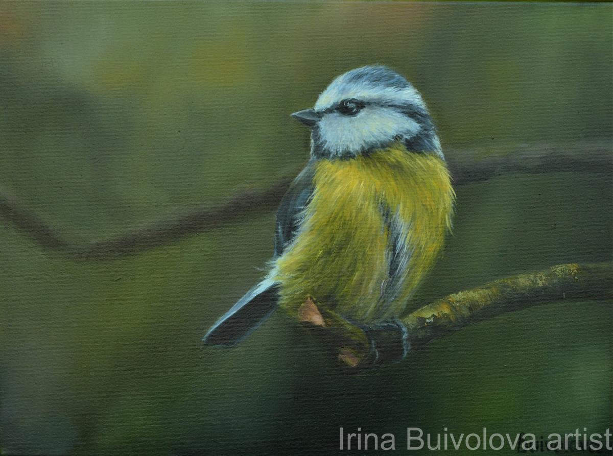 Bird titmouse painting, oil on canvas size 30 40 cm