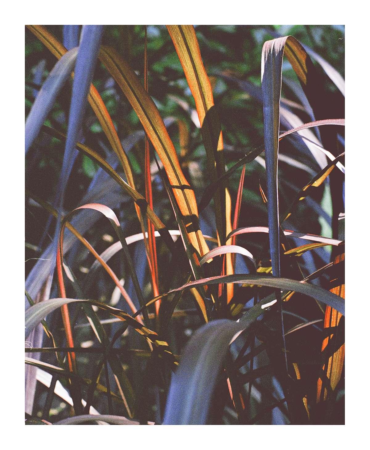 'Brooklyn Botanica 1' - 11.1 x 13.5 inches - £25