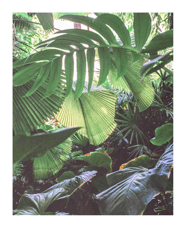 'Brooklyn Botanica 2' - 11 x 13.5 inches - £25
