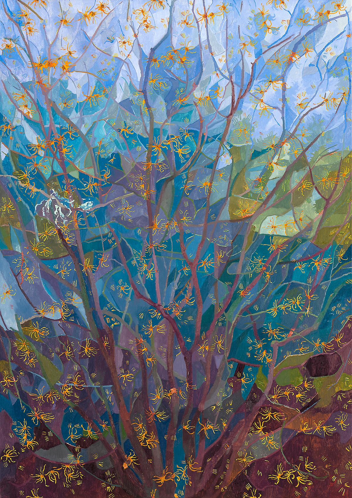 Hamamelis in flower, L Glover, 2015, SOLD
