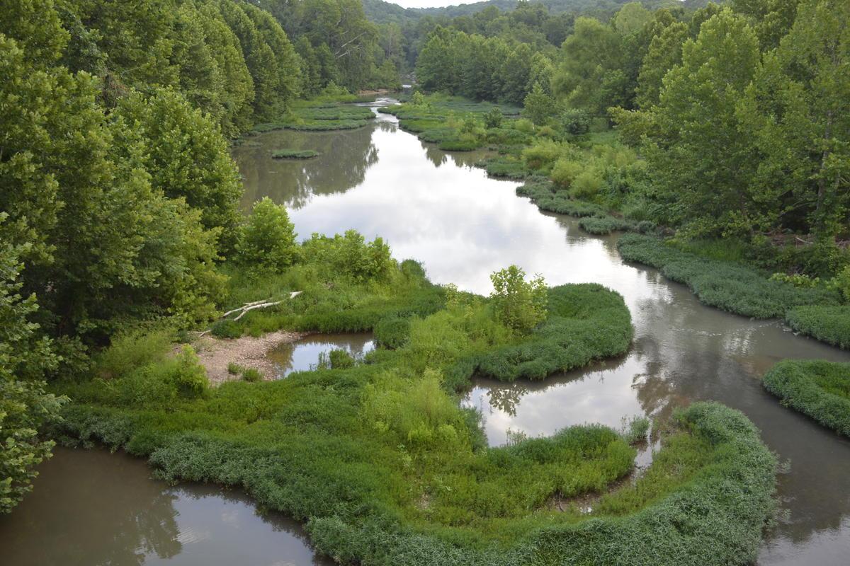Bella Vista Creek