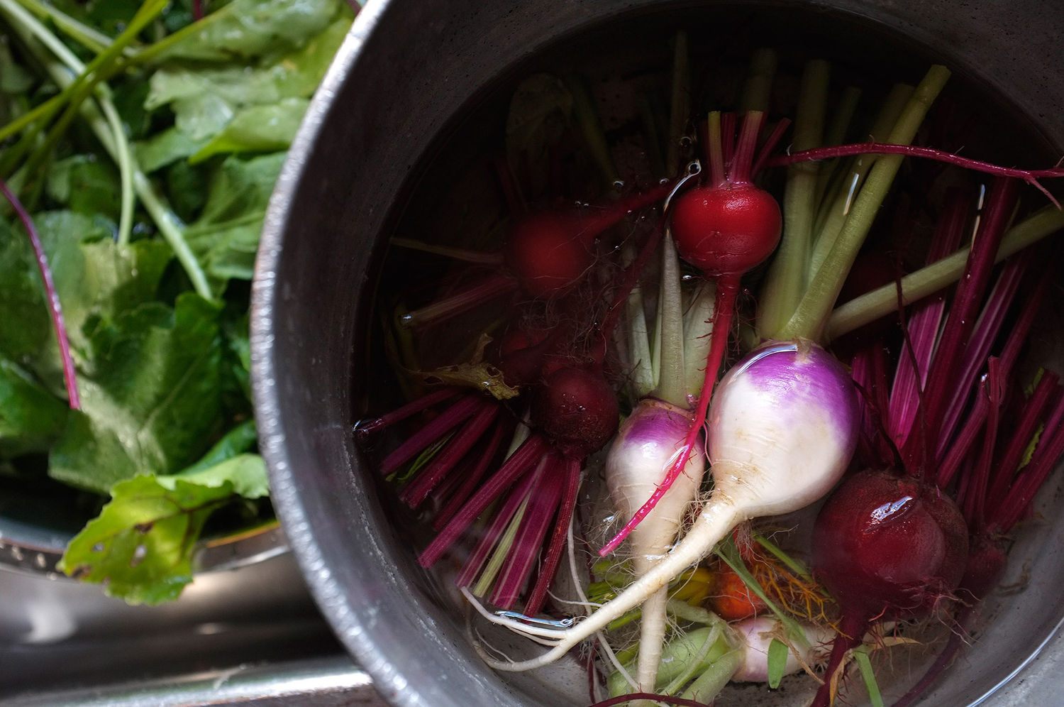 Summer Harvest, Beets and Turnips.