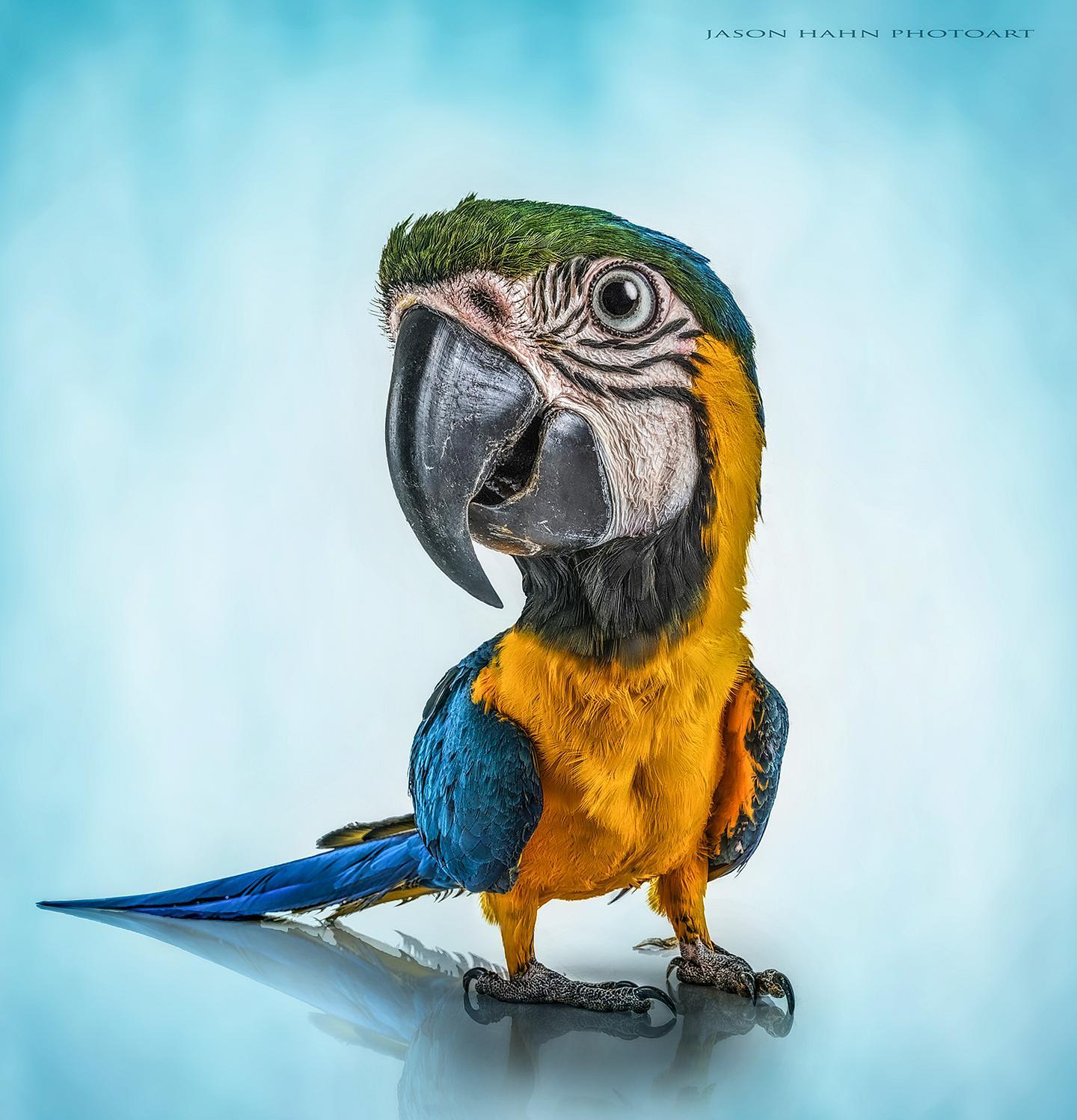 Polly wanna cracka